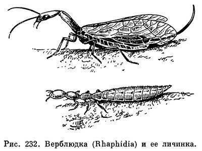 Сороконожка в частном доме или квартире: как вывести насекомое