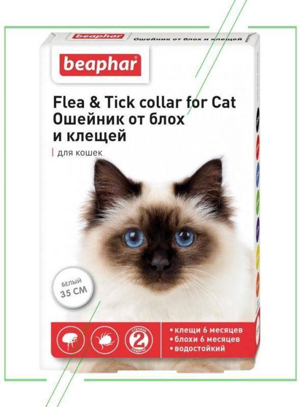 Ошейник для кошек от блох и клещей: как выбрать ошейник для кошек и котят