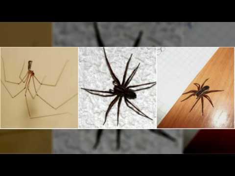 Где и как найти в доме и избавиться от пауков в своих «четырех углах»