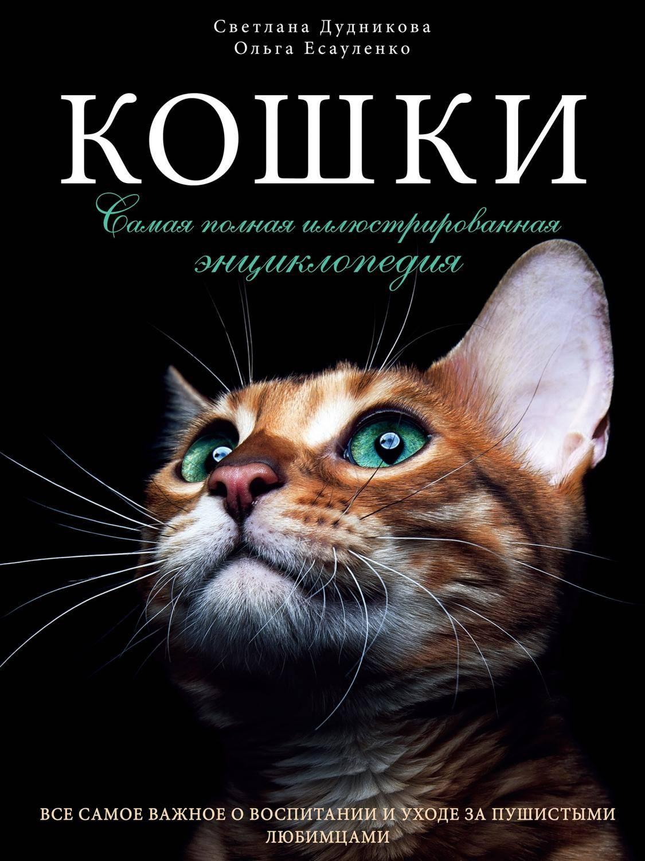 Клещи у кошек и котов