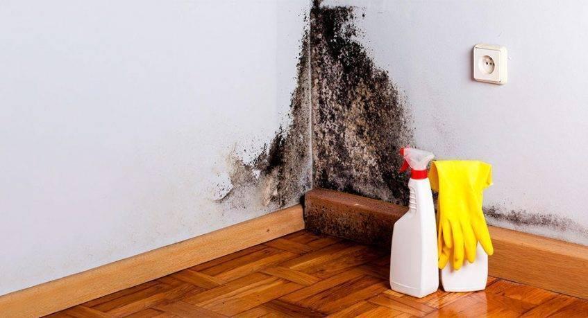 Как избавиться от плесени в ванной с помощью соды  как вывести на кафеле, на герметике, со швов на стенах