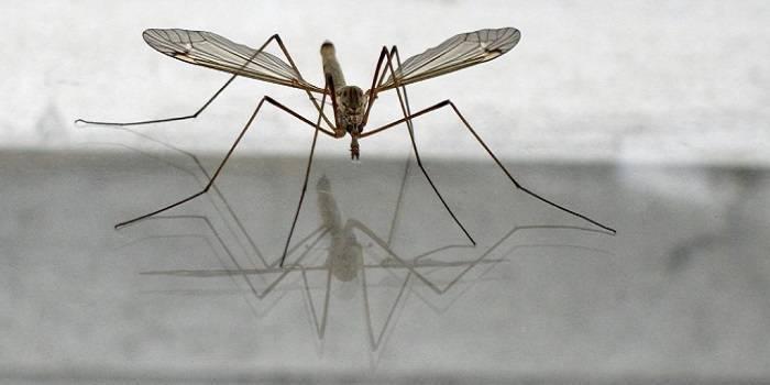 Кто ест комаров и их личинки
