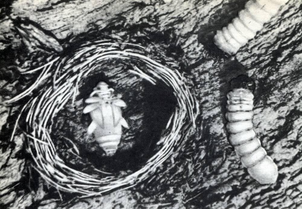 Скакун лесной: как обнаружить быстроногого хищника