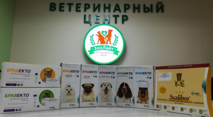 Спасаем собаку от блох: эффективные советы