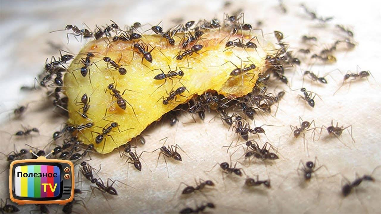 Способы избавления от муравьев в огороде