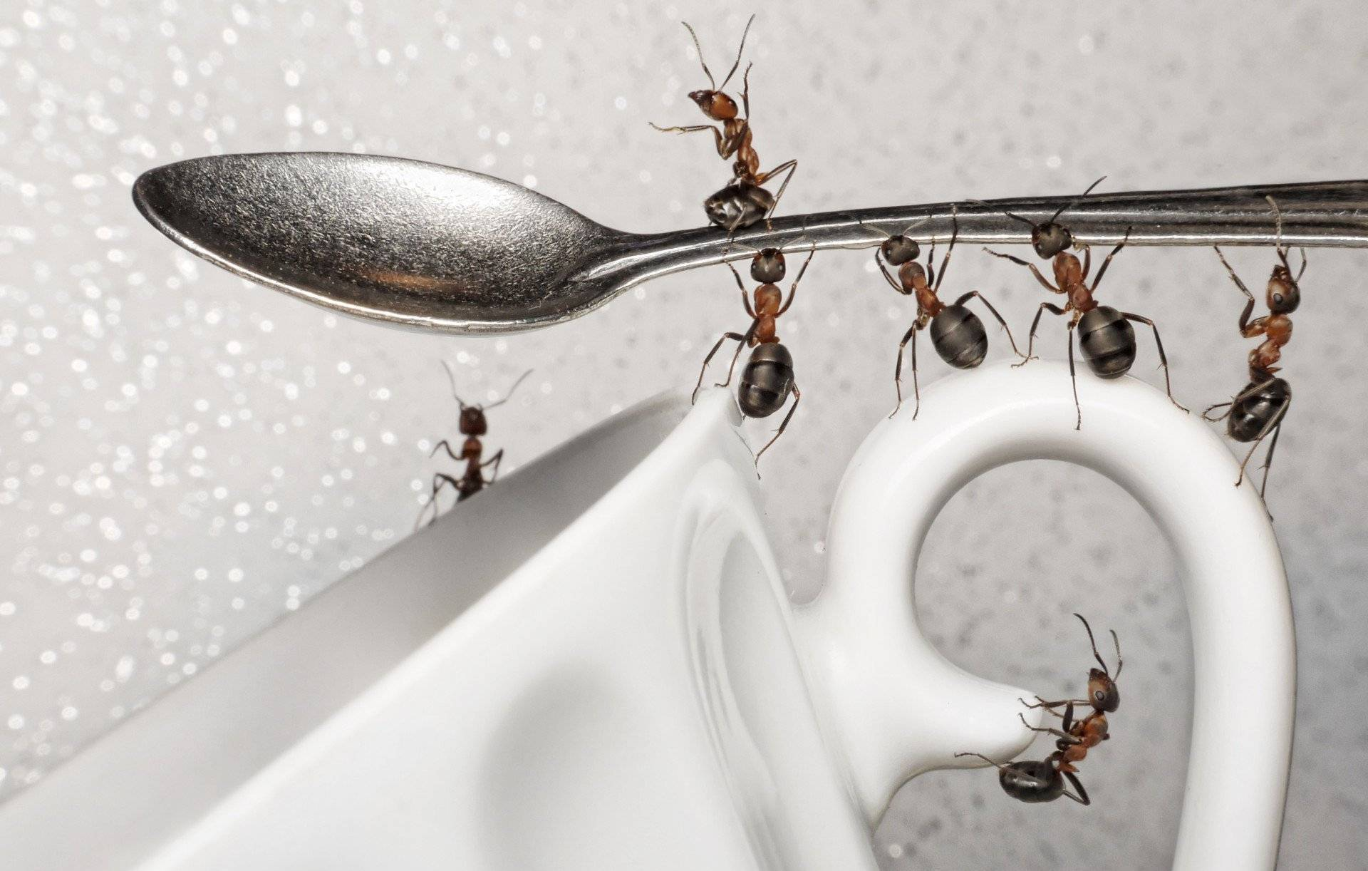 Как избавиться от рыжих муравьев