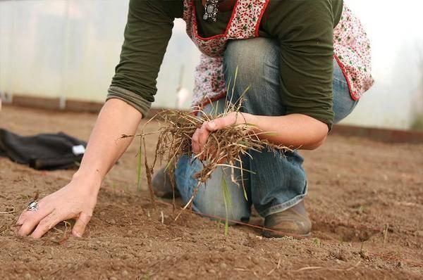 Обработка теплицы бордосской смесью осенью. как провести дезинфекцию теплицы из поликарбоната осенью от паразитов и вредителей: полезные советы огородникам. способы дезинфекции почвы