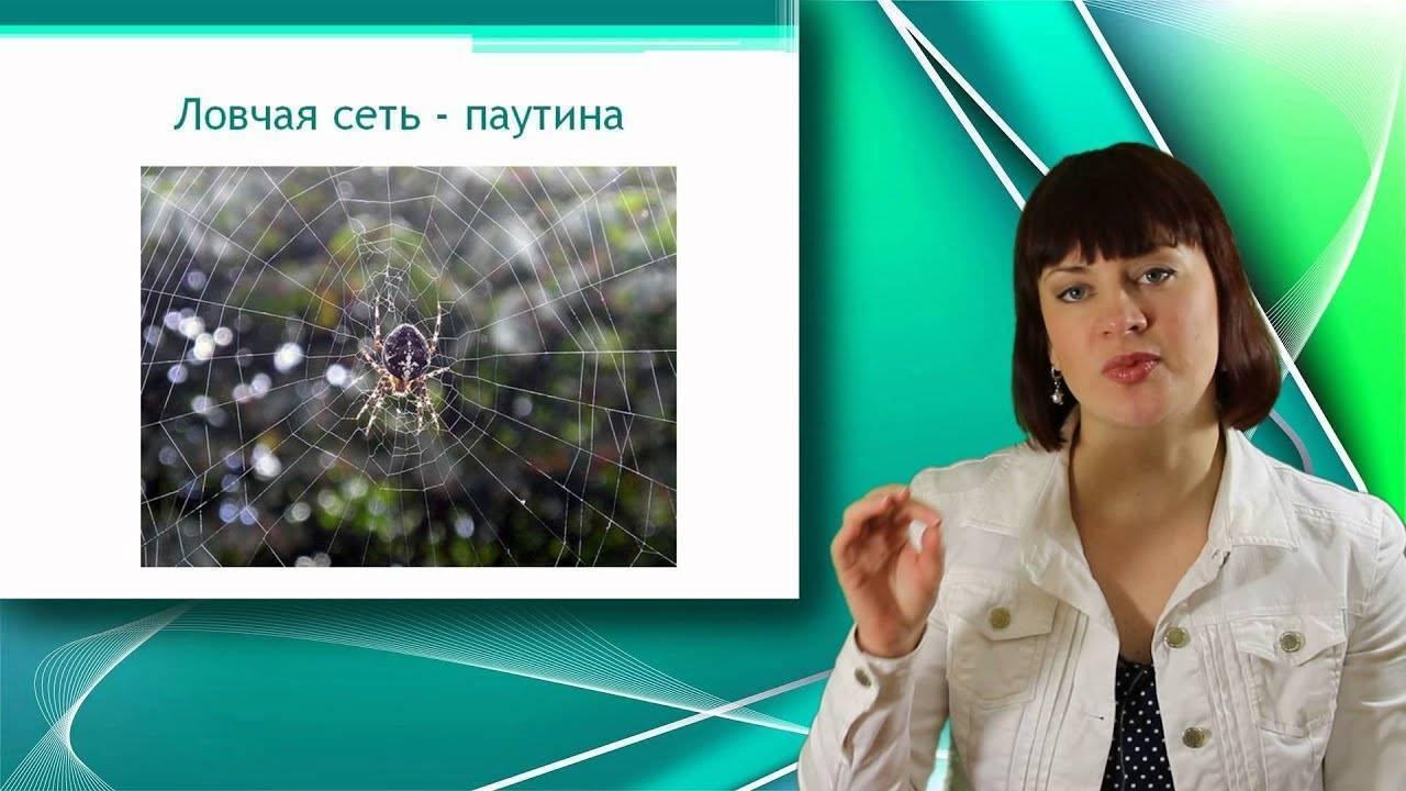 Паук крестовик ядовитый или нет. как распознать паука-крестовика и насколько он опасен? описание внешнего вида