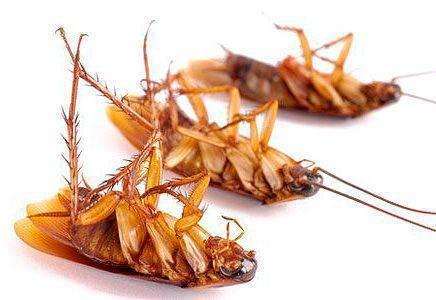 «глобал» от тараканов: действительно ли эффективное средство?