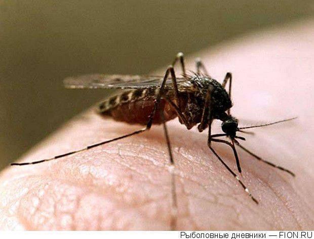 Лучшие фумигаторы от комаров
