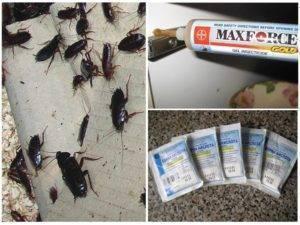 У соседей тараканы, которые отравляют вашу жизнь — узнайте куда жаловаться, чтобы прекратить это безобразие!