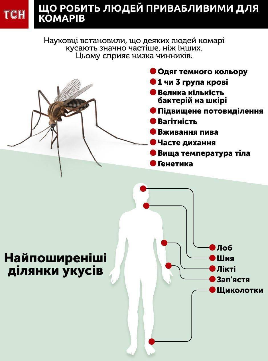 Почему кусают комары — особенности поведения кровососущих, поиск жертвы, опасность атаки