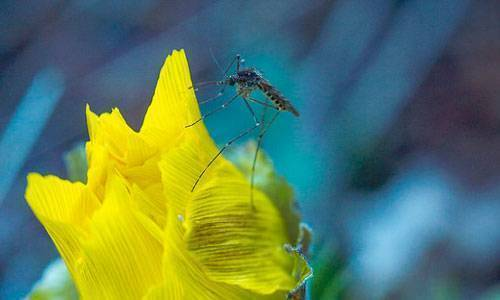 Что означает образ комара во сне – толкования по сонникам и согласно народным поверьям. большие комары