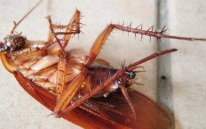 Регент 800 — надёжный способ попрощаться с тараканами в доме
