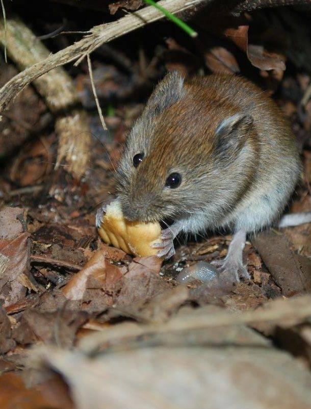 Как и какими средствами бороться в частных домах с мышами