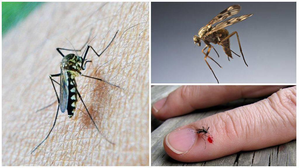 Какую группу крови любят комары