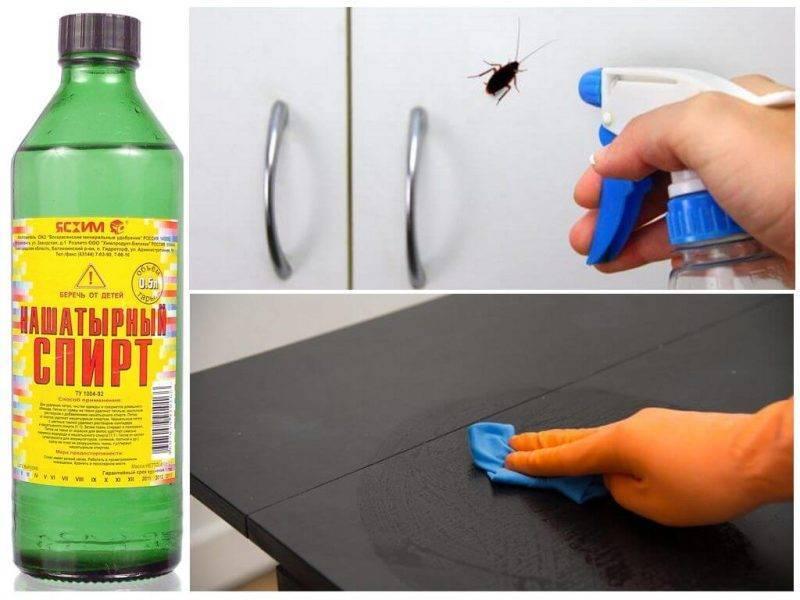 Какое средство от тараканов самое эффективное