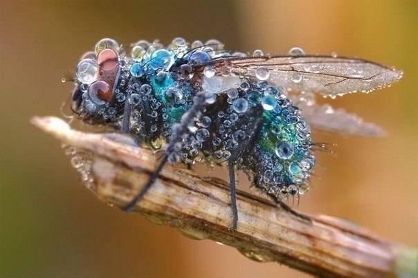 Почему мухи ползают по потолку. как муха садится и держится на потолок. что показала макросъемка