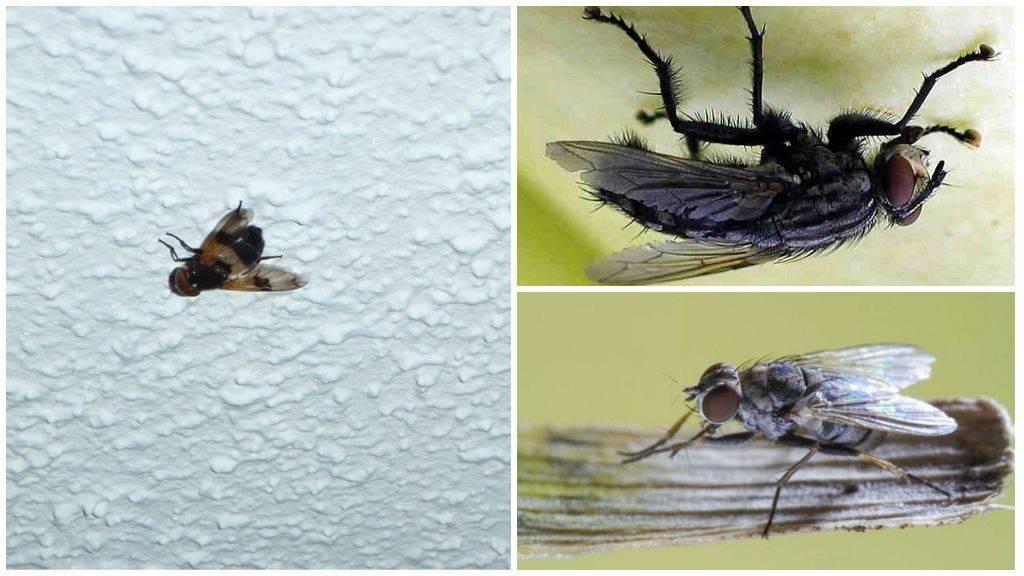 Как муха садится и держится на потолок. ученые разобрались, почему муха не падает с потолка почему муха ходит по потолку проект