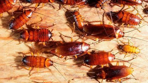 Применение нашатырного спирта от тараканов