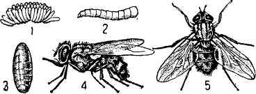 Почему муха в августе особенно злая и больно кусается?
