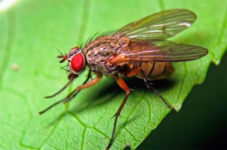 Как избавиться от луковых мух