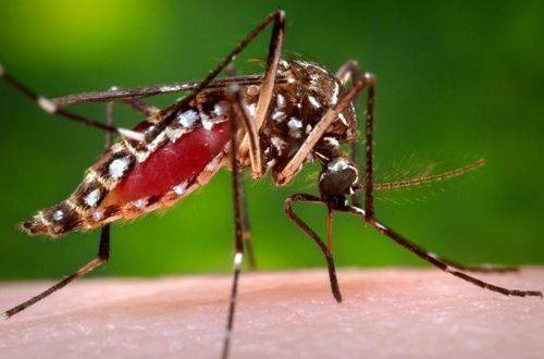 Чем малярийный комар отличается от обыкновенного