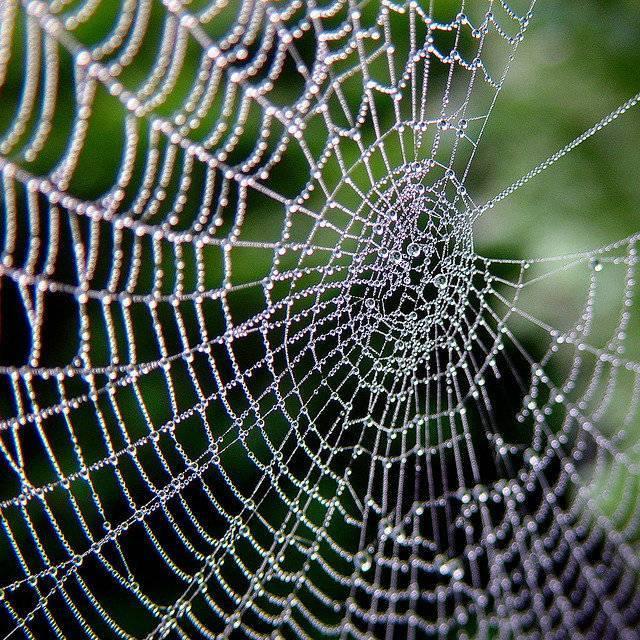 Паутина – все приметы, связанные с паучьей сетью. где можно встретить паутину? осенние приметы о природе