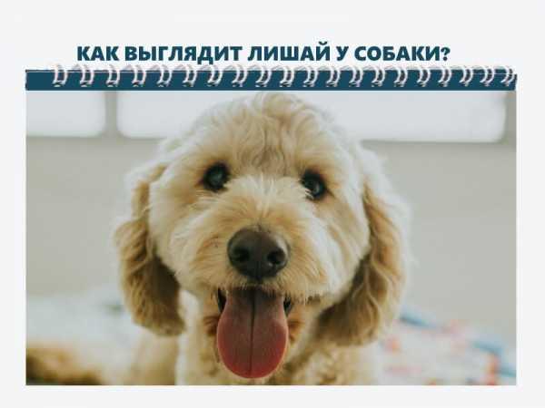 Собаку укусил клещ: как вытащить, симптомы и лечение