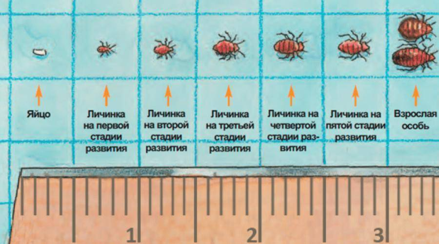 Мороз и кипяток в борьбе с паразитами: при какой температуре погибают клопы, можно ли их выморозить или заморить паром