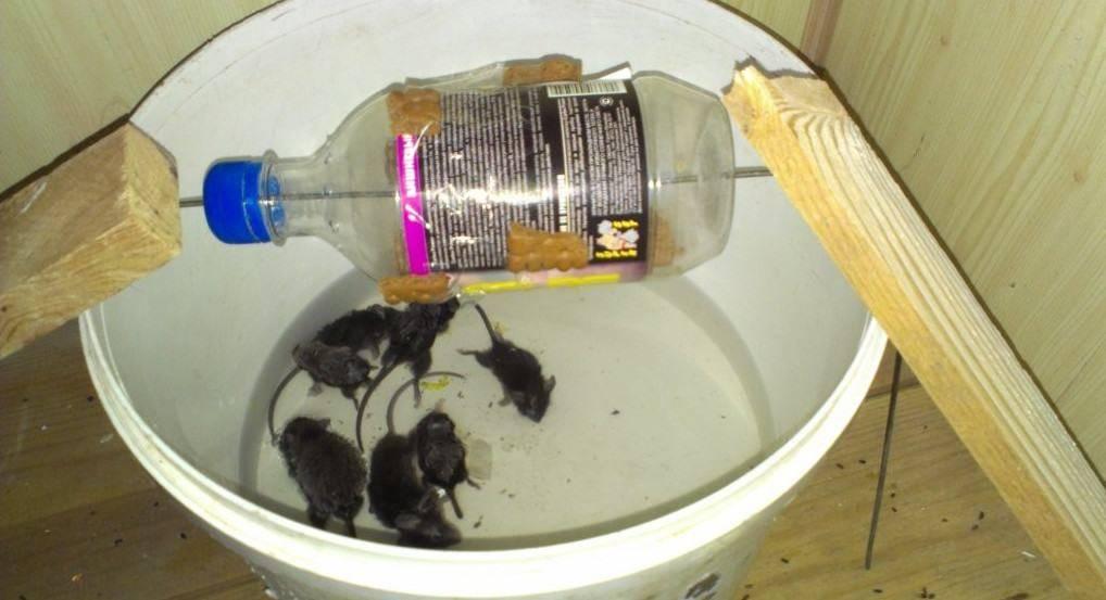 Как ловить мышей без мышеловки