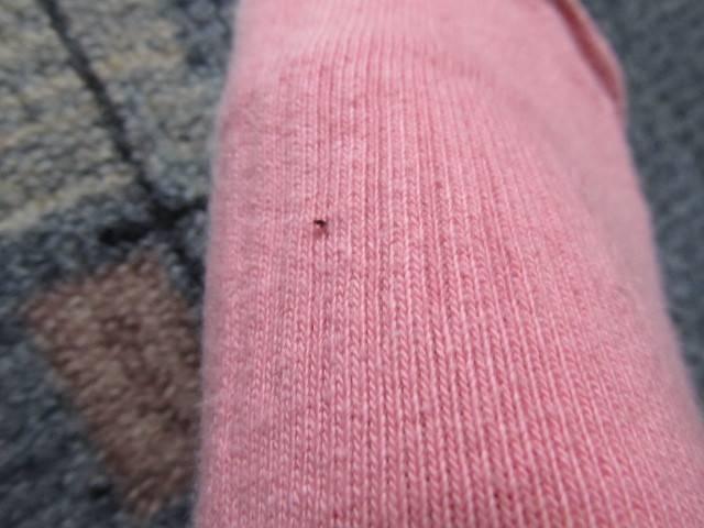 Полынь от блох: очистим дом от паразитов народными методами