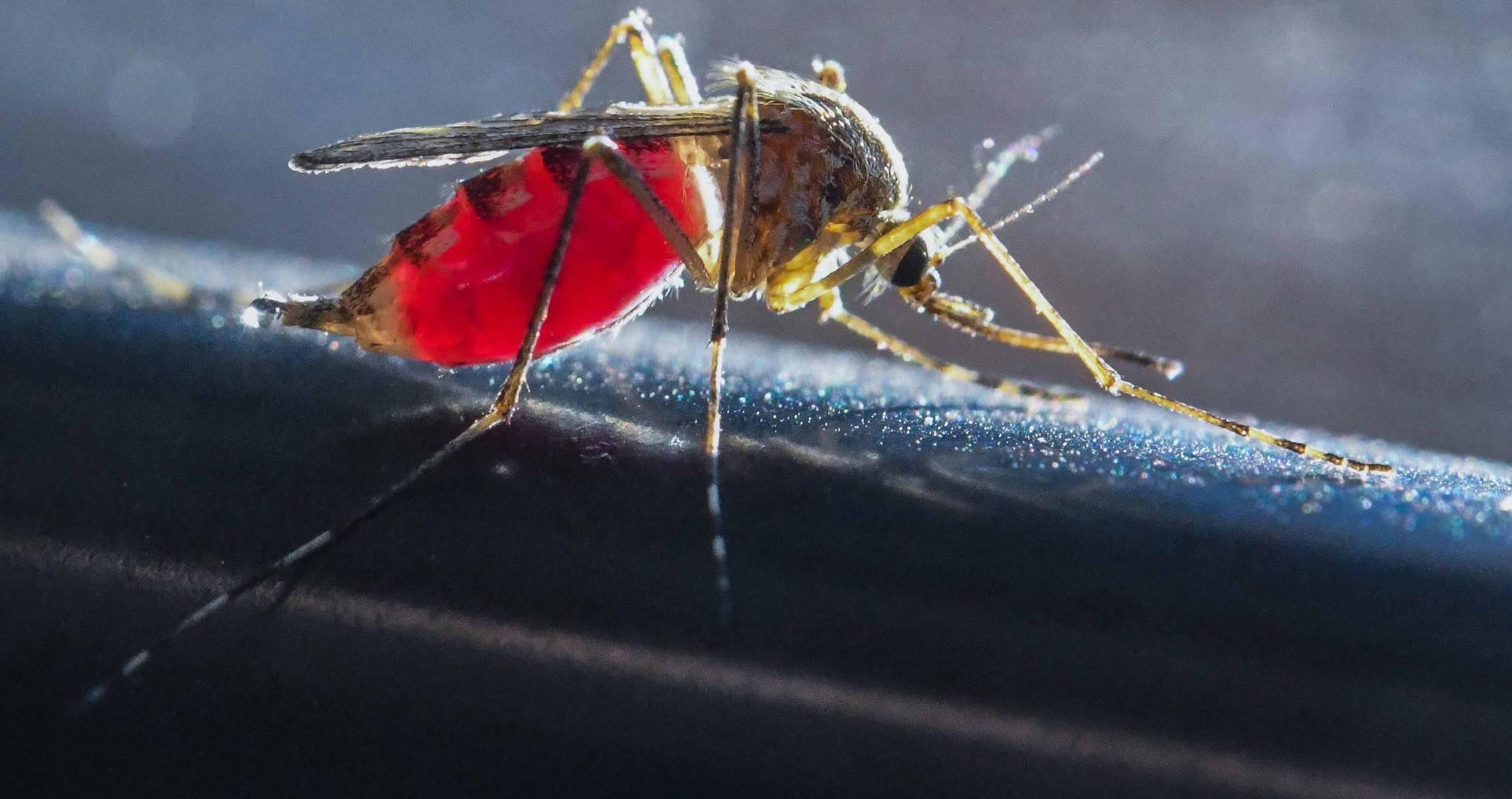 Вирусные комары могут атаковать крым