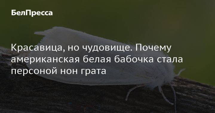 Чем опасны белые бабочки на малине, все способы борьбы с насекомыми и гусеницами