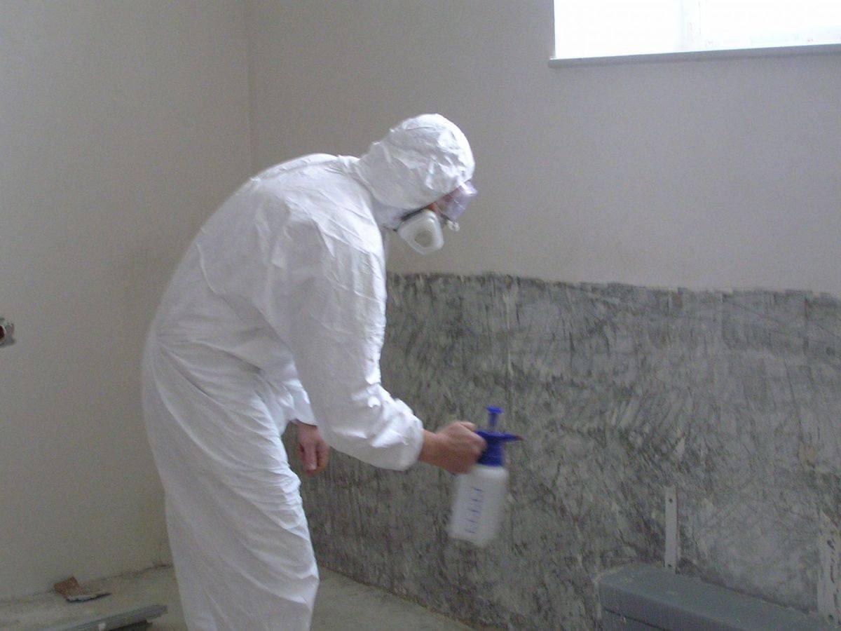 Как вывести плесень и грибок на стенах в квартире?