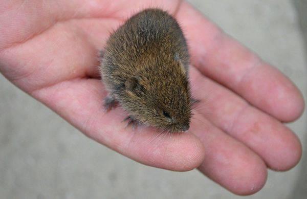 Причины появления мышей в домах