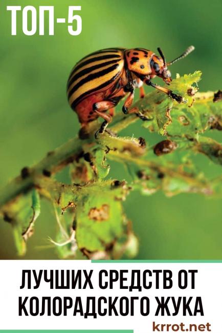 Какие средства от колорадского жука выбрать – обзор популярных препаратов