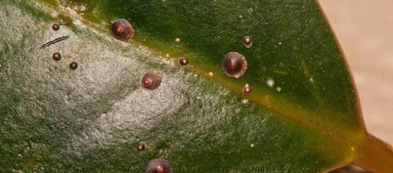 Паутинный клещ на комнатных растениях: как бороться, откуда берется, меры борьбы и профилактика