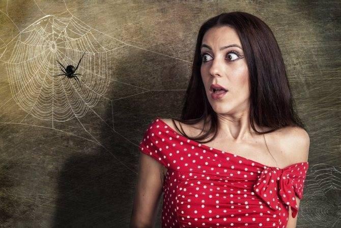 Почему пауки плетут паутину осенью. паутина – все приметы, связанные с паучьей сетью. где можно встретить паутину