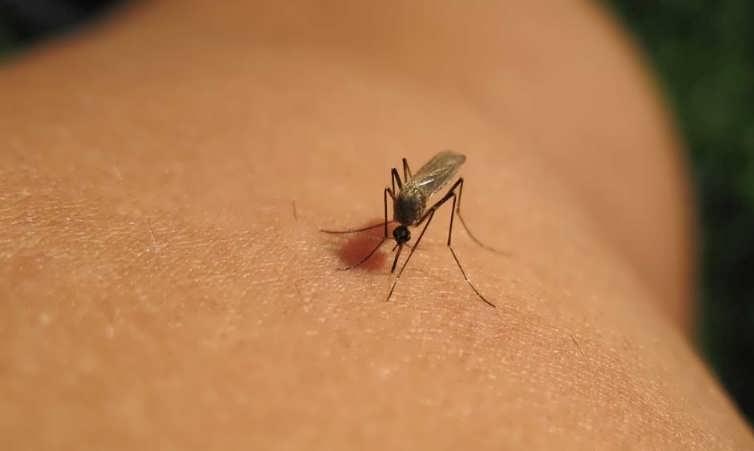 Средство от комаров в домашних условиях натуральное и безопасное