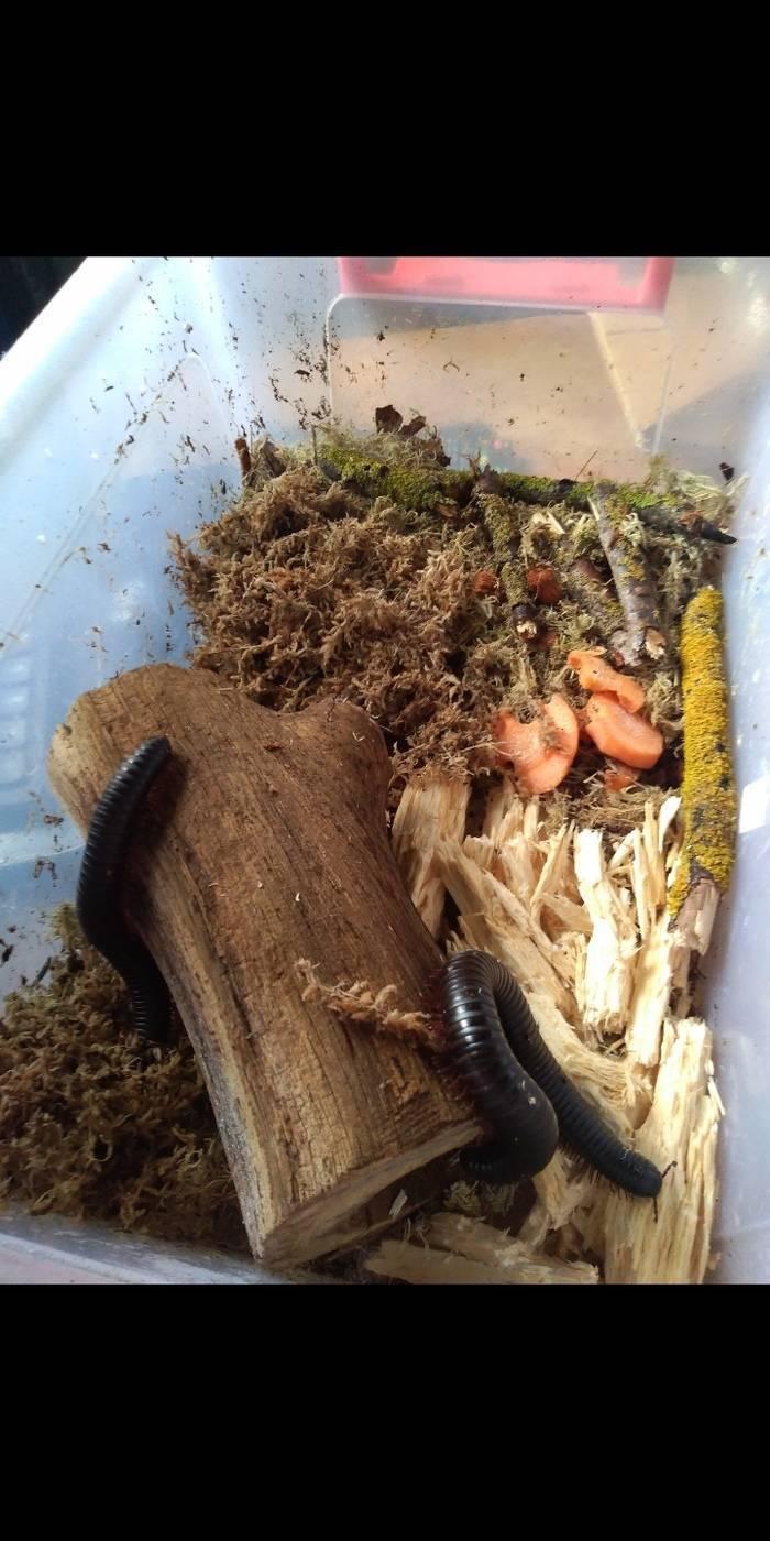 Дедка обыкновенный— типичная речная стрекоза