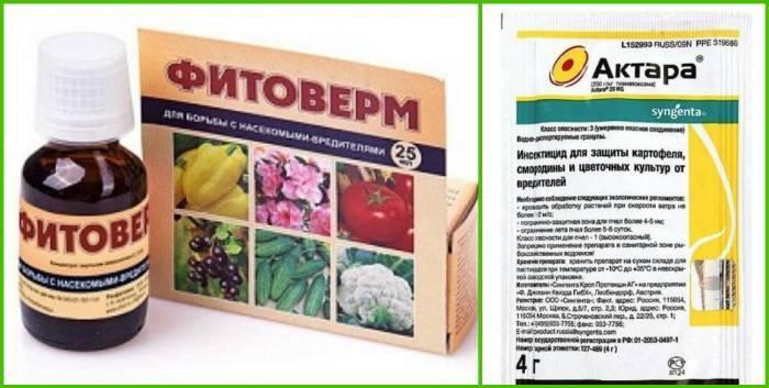Средства против гороховой тли – эффективная химия и безопасные народные рецепты