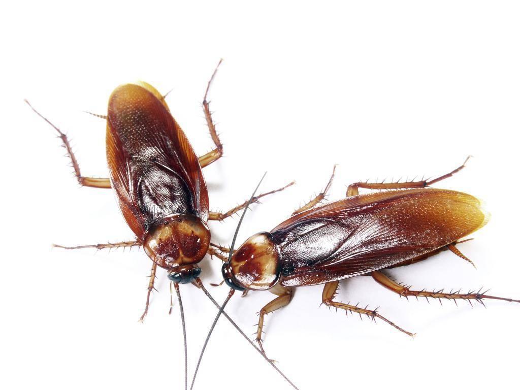 Средства от тараканов от торговой марки «рейд»: надежная защита при грамотном использовании