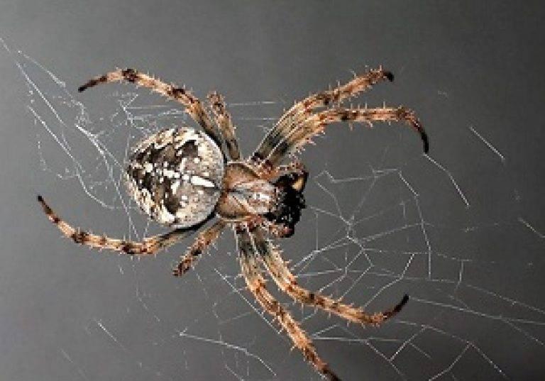 Как избавиться от пауков, облюбовавших наши дома