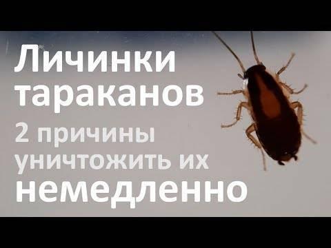 При какой температуре погибают тараканы и их личинки