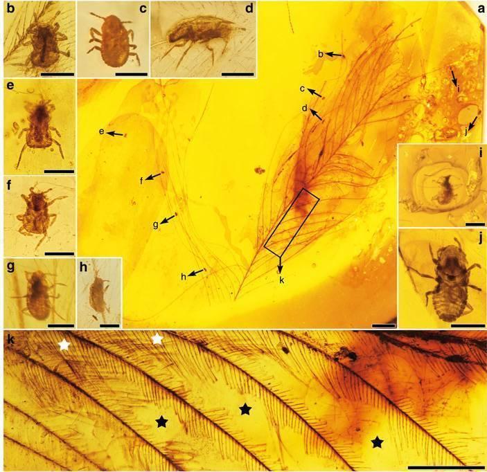 Образ жизни насекомых — какие они бывают и как живут?