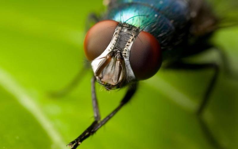 Как выбрать эффективный отпугиватель пчел