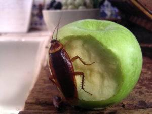 В какие организации нужно обращаться за дезинсекцией от тараканов и на что лучше обратить внимание?