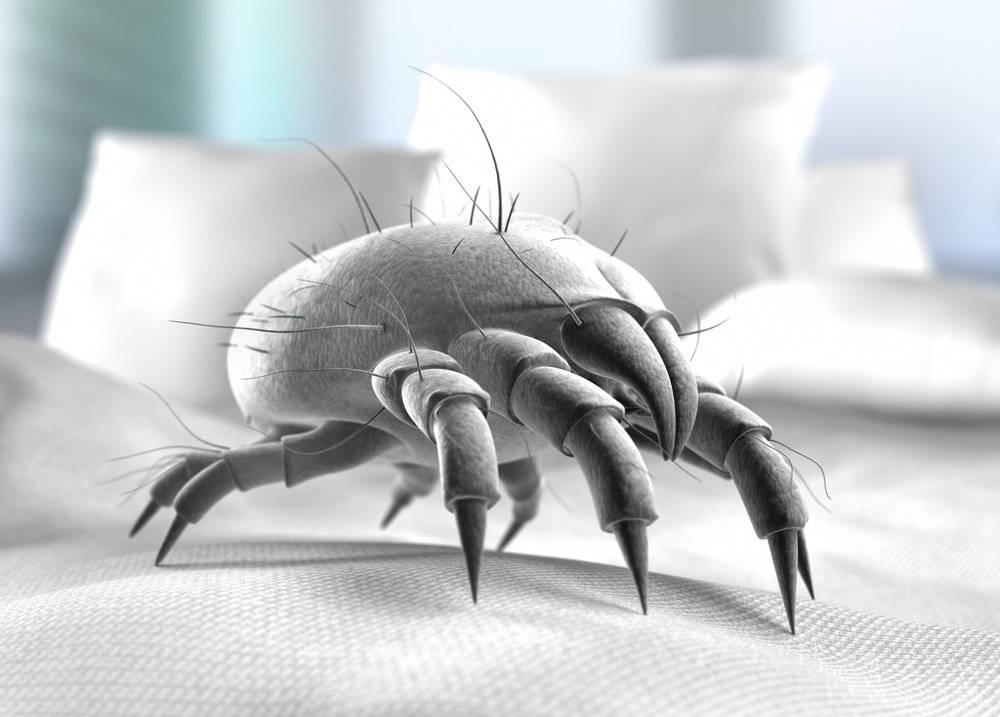 Пылевые домашние клещи: как с ними бороться?