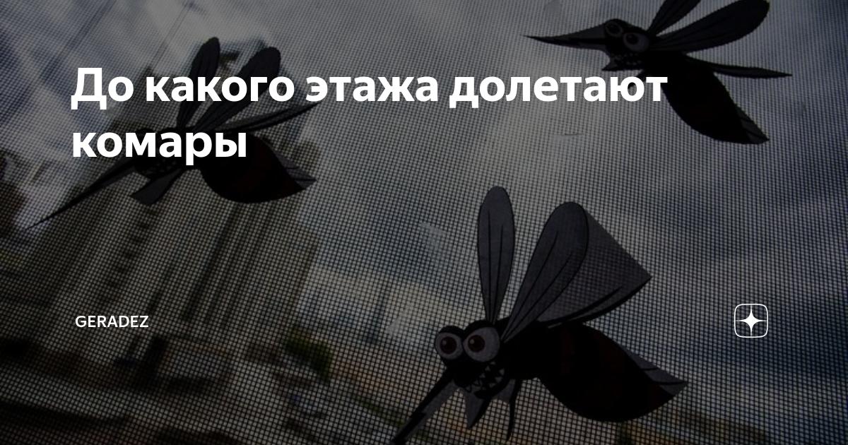 Как высоко летают мухи. интересный вопрос – до какого этажа долетают комары? высота полета комара – интересные факты